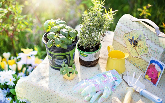 gardening tools and plants on a table